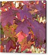 Traces Of Fall Canvas Print