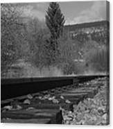 Tracks And Trees Canvas Print