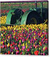 Tractor In The Tulip Field, Tulip Canvas Print