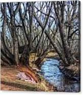 Trail By Fountain Creek Winter Canvas Print