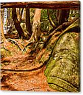 Trail In A Forest, Muskoka, Ontario Canvas Print