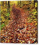 Trail In Fall Forest Canvas Print