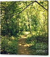 Trail Of Hope II Canvas Print