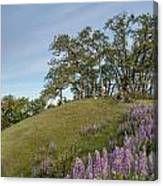 Trail Of Lupine Canvas Print