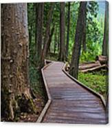 Trail Of The Cedars Canvas Print