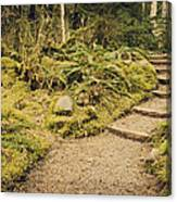 Trail Through The Moss Canvas Print