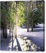 Trail To Bear Lake 4490 Canvas Print