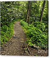 Trail To Chimney Tops - D005669a Canvas Print