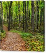 Trail To Miners Falls Canvas Print