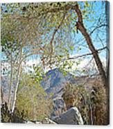Trailhead Area In Andreas Canyon In Indian Canyons-ca Canvas Print