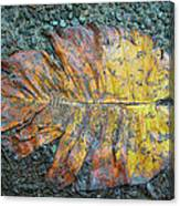 Trampled Leaf Canvas Print