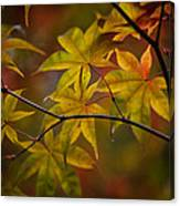 Tranquil Collage Canvas Print