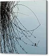 Tranquil Reeds Canvas Print