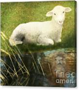 Transformation Lamb Or Lion Canvas Print
