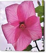 Translucent Flower After The Rain Canvas Print