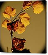 Translucent Leafs Canvas Print