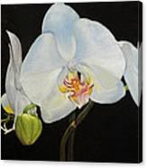 Translucent Orchids Canvas Print