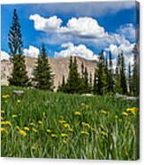 Trappers Lake Meadow Canvas Print