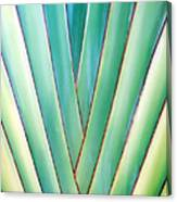 Travelers Palm 6 Canvas Print