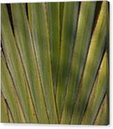 Traveller's Palm Patterns Dthb1542 Canvas Print