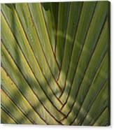 Traveller's Palm Patterns Dthb1543 Canvas Print