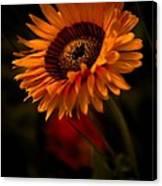 Treasure Flower Canvas Print