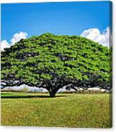 Tree 10 Canvas Print