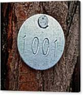 Tree 1001 Canvas Print