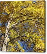 Tree 4 Canvas Print