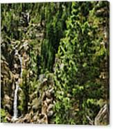 Tree Above Leavitt Falls  Canvas Print