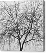 Tree Abstract In Black And White Canvas Print