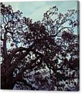 Tree Against Sky Canvas Print