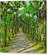 Tree Alley In Castle Park Canvas Print