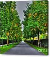 Tree Alley Canvas Print