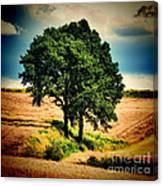 Tree Alone Canvas Print