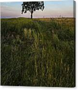 Tree Alone Canvas Print