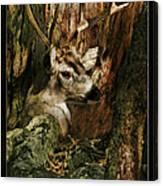 Tree And Buck Canvas Print