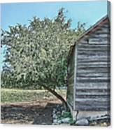 Tree And Building Canvas Print