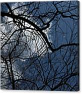 Tree And Clouds Canvas Print