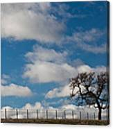 Tree And Fence On A Landscape, Santa Canvas Print