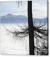 Tree And Fog Canvas Print