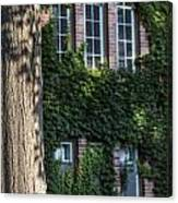 Tree And Ivy Windows Michigan State University Canvas Print