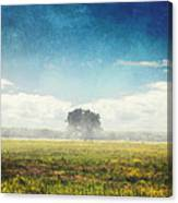 Tree And Meadow Canvas Print