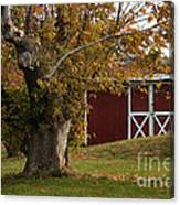 Tree And Red Barn Canvas Print