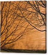 Tree And Shadow At Cogswells Grant Canvas Print