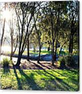 Tree And Shadow Canvas Print