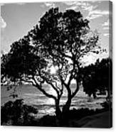 Tree And Sun Canvas Print