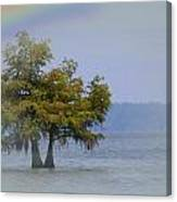 Tree And The Rainbow Canvas Print