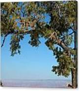 Tree Arch Canvas Print