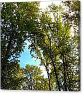 Tree Arches At Clackamette Park Canvas Print